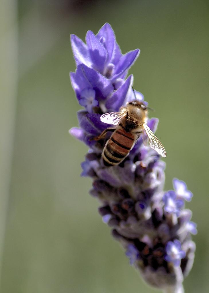 A buzz by sugarmuser