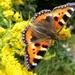 I'm still pursuing butterflies...... by quietpurplehaze