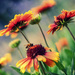 Blanket Flowers by pflaume