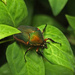 June Bug by milaniet