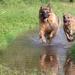 Doggy paddle by shepherdman