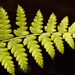 Fern by richardcreese