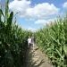 Maize Maze -You're Doing It Wrong by helenmoss
