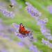 Bees & Butterflies  by gailmmeek