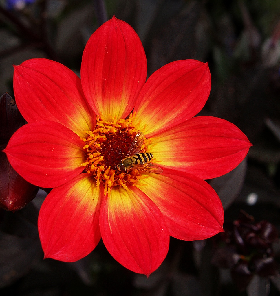 Red flower by rich57