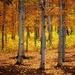 Canadian Fall - filler by judithdeacon