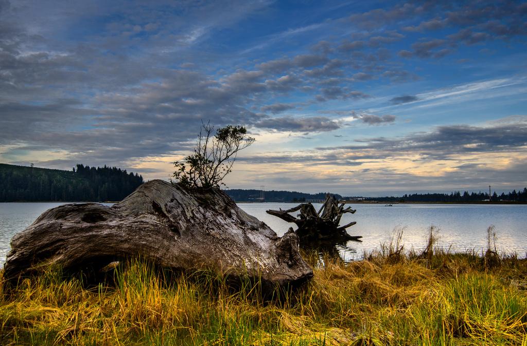 Dawn Driftwood Before Rain by jgpittenger