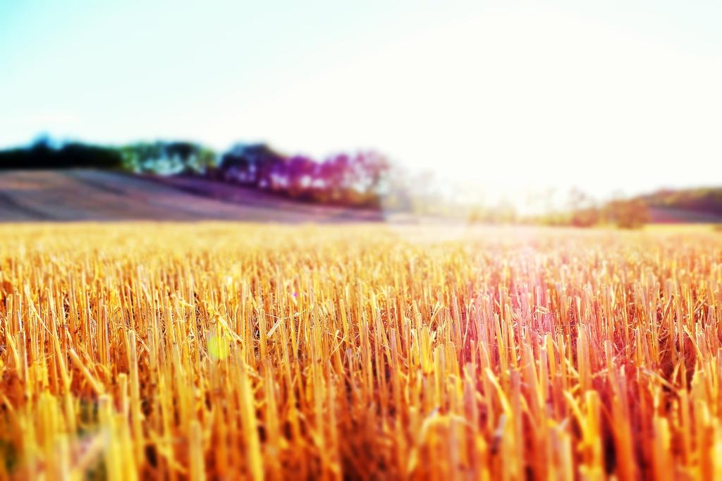 Pendant que les champs brûlent.... by cocobella
