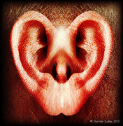 18th Aug 2013 - Listen To Your Heart.