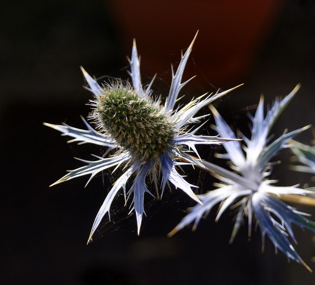 Spiky by filsie65