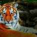 Top Cat! by darrenboyj