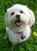 5th Aug 2009 - Sasha Dog
