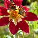 butterflies and dahlia  by quietpurplehaze