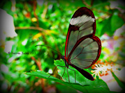 23rd Aug 2013 - Stratford-Upon-Avon Butterfly Farm.