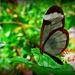 Stratford-Upon-Avon Butterfly Farm. by darrenboyj