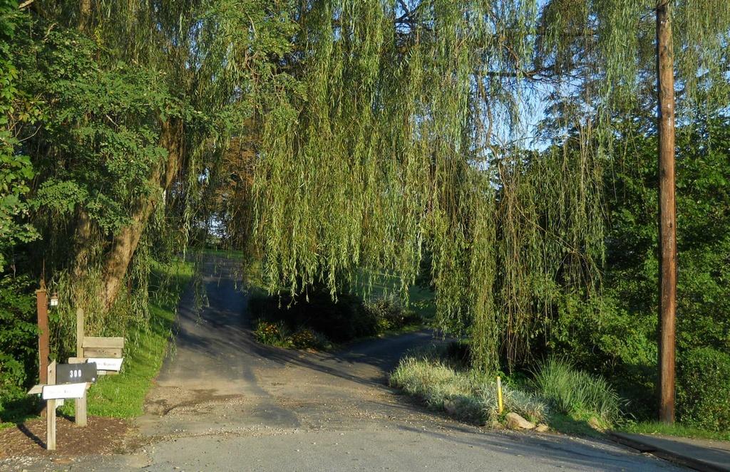 Tree draped driveways by mittens