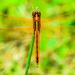 Dragonfly enjoying the sun by kathyladley