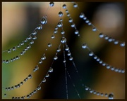 26th Aug 2013 - Spiders Crystels..