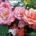 Begonia Pot by tonygig
