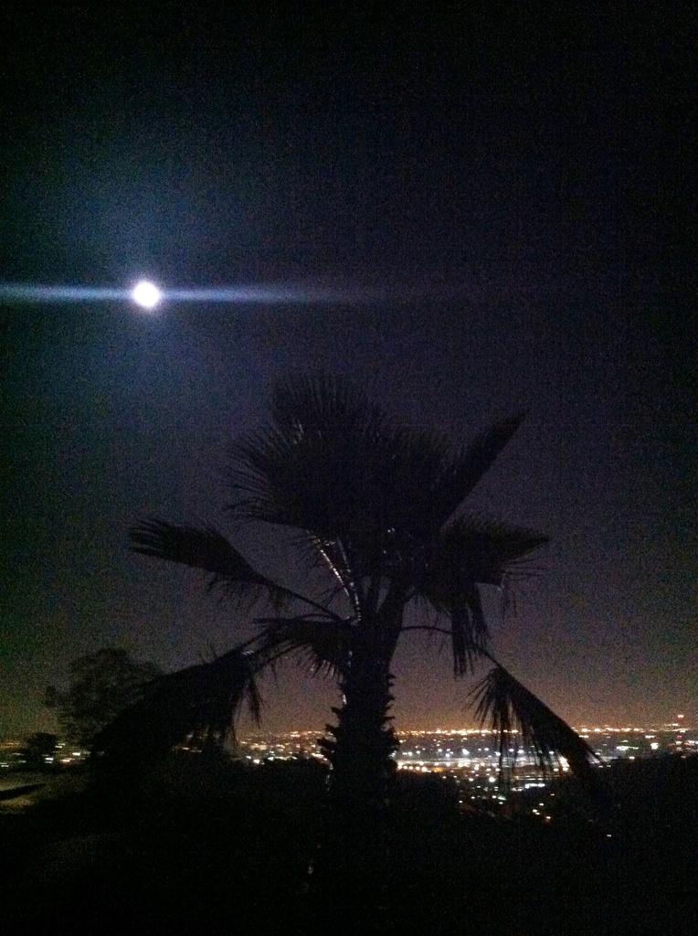 Palm Tree Moon Bathing over LA by jnadonza