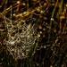 Dew Kissed Spider Web  by jgpittenger