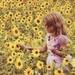 sunflowers  by edie