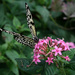 Butterfly on pink flower by mittens