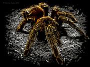 28th Aug 2013 - Arachnophobia? (Don't View Large)