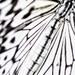 Monofly by jesperani