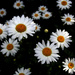 Don't Eat the Daisies by wendyhgill