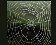 30th Aug 2013 - Shakey Web and bokeh..