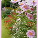 There is still a lot of colour in the flower borders. by snowy