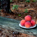 Sweet Treat by rayas