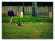 1st Sep 2013 - One Man & his Dog