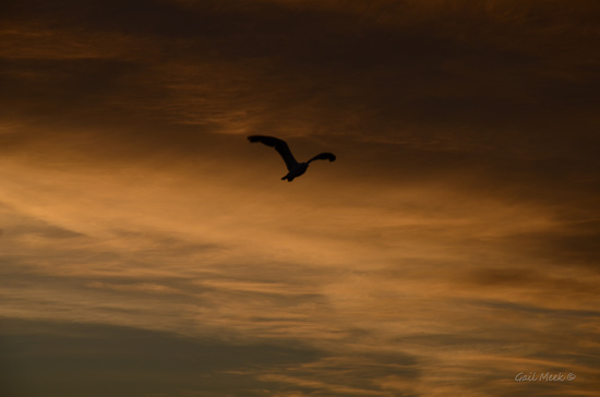 Gliding on the Updraft by gailmmeek