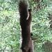 Aug 30. gymnastic squirrel by margonaut
