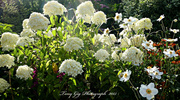 3rd Sep 2013 - White Garden