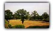 3rd Sep 2013 - The Oak Tree