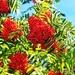 Sunny Berries by jesperani