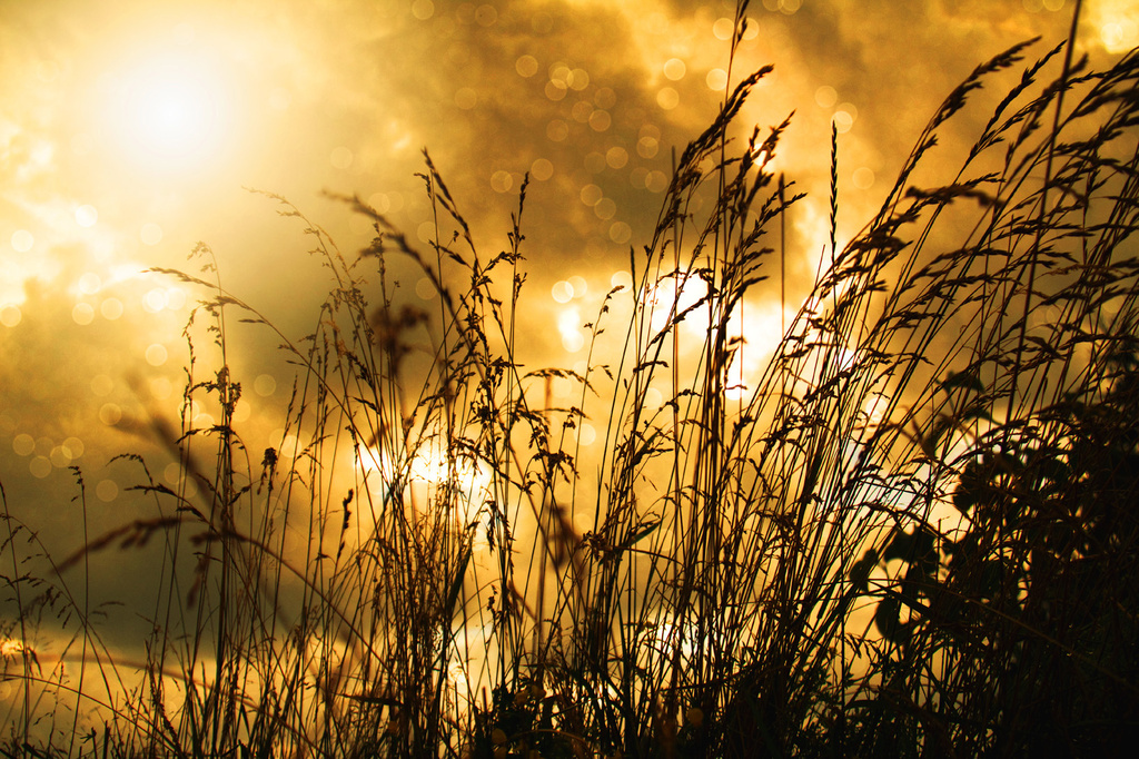 Sunlite Grasses by pdulis