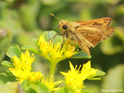 1st Sep 2013 - Another skipper…