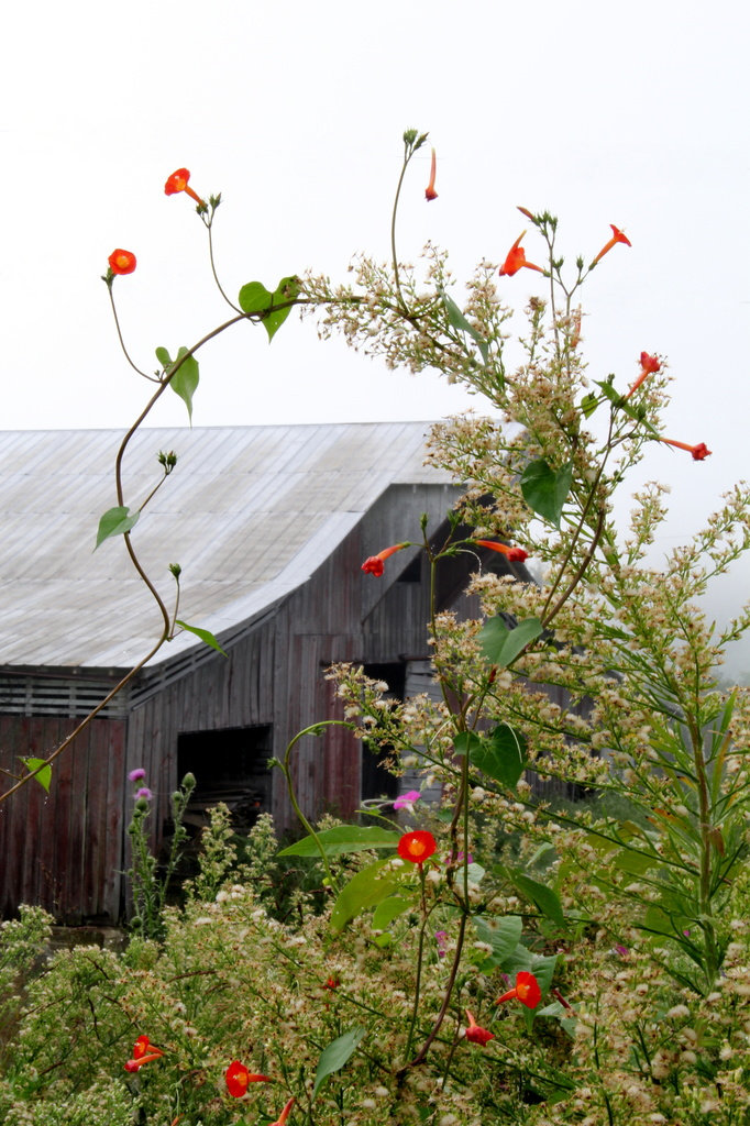 Wildflowers in Front of the Barn by calm