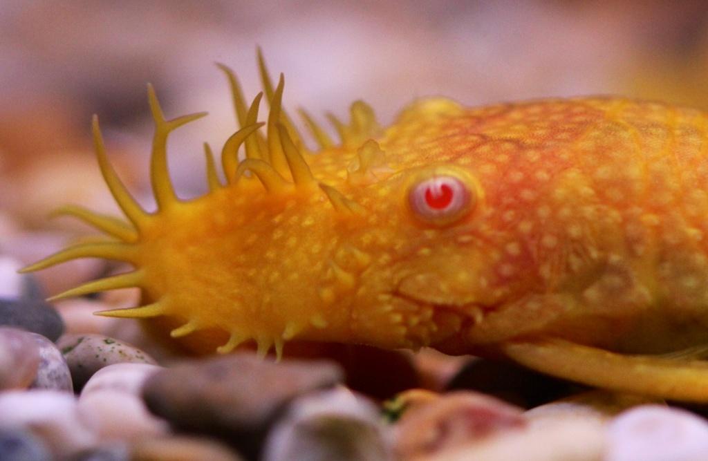 Plecostomus! by chris17