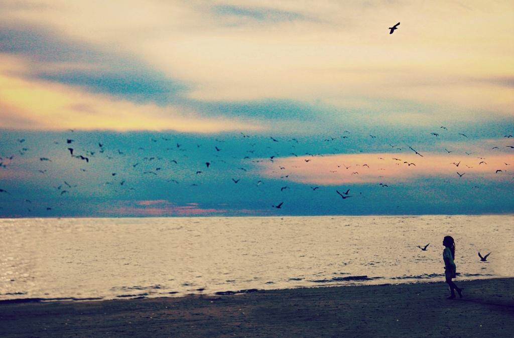 goodnight gulls by edie
