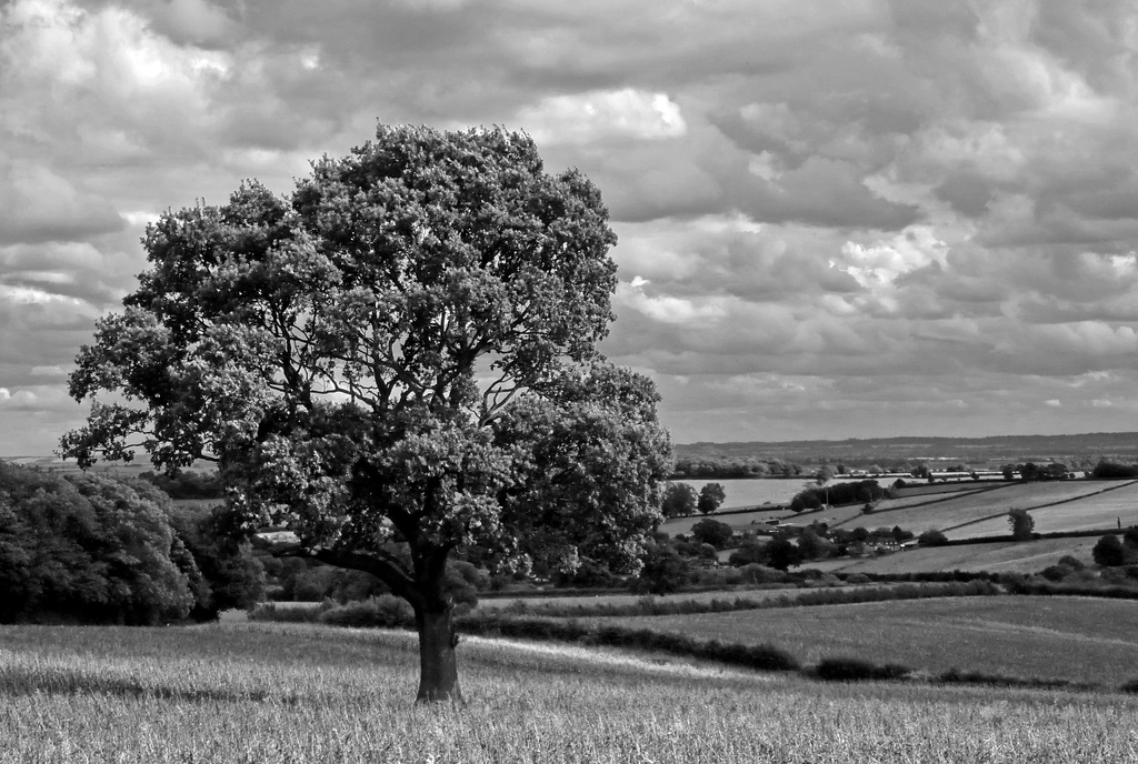 Lone Tree by phil_howcroft