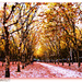 Beautiful Bordeaux in Autumn. by darrenboyj