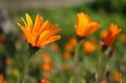 2nd Sep 2010 - Wild daisies
