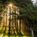Sun Rays at Heceta Lighthouse Park  by jgpittenger
