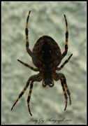11th Sep 2013 - Spider