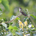 Honeysuckle perch by cjwhite